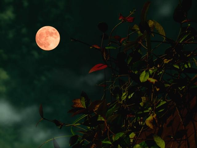 皆既月食「スーパー・ブルー・ブラッドムーン」を横浜で撮影しました