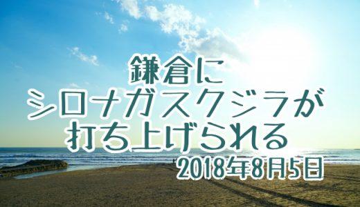 鎌倉でシロナガスクジラが打ち上がる、その後どうなった?