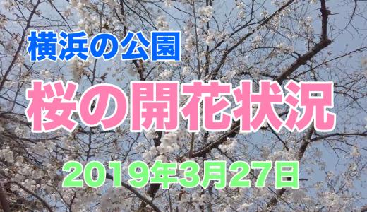 横浜の桜の名所の開花状況 2019年3月27日時点